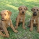 Thank you, all puppies have a new home.
