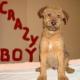 CRAZY BOY …… posledný volný psík